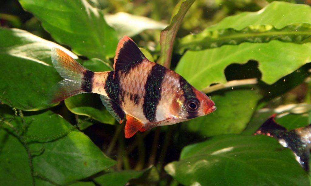 Как выбрать подходящих аквариумных рыб для новичков