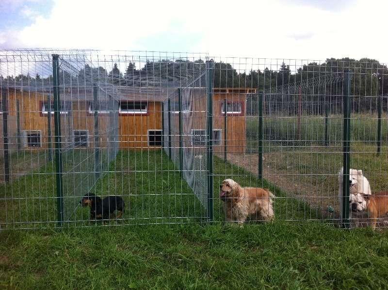 Гостиницы для животных в Новосибирске в 2020 году