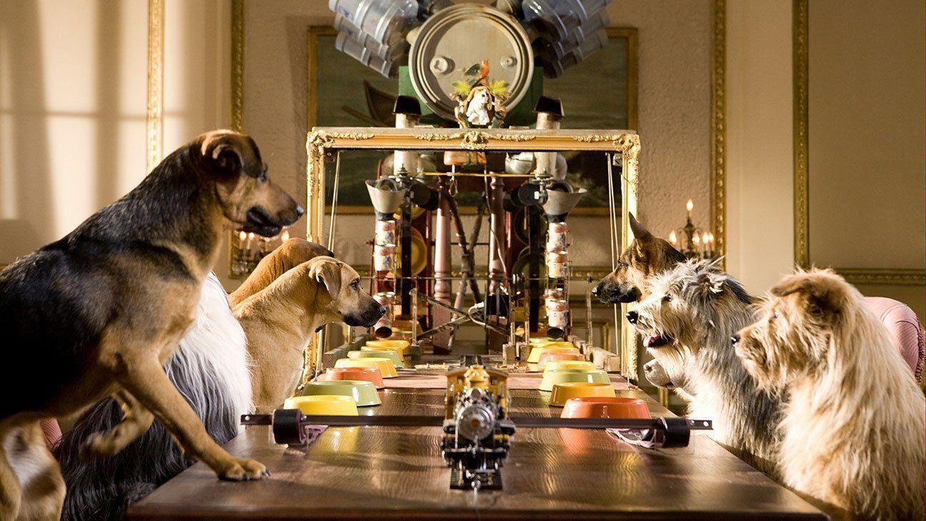 Рейтинг лучших гостиниц для животных в Волгограде в 2020 году
