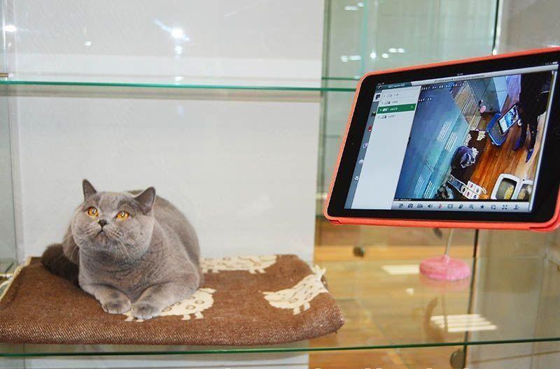 Как выбрать лучшую гостиницу для животных в Москве
