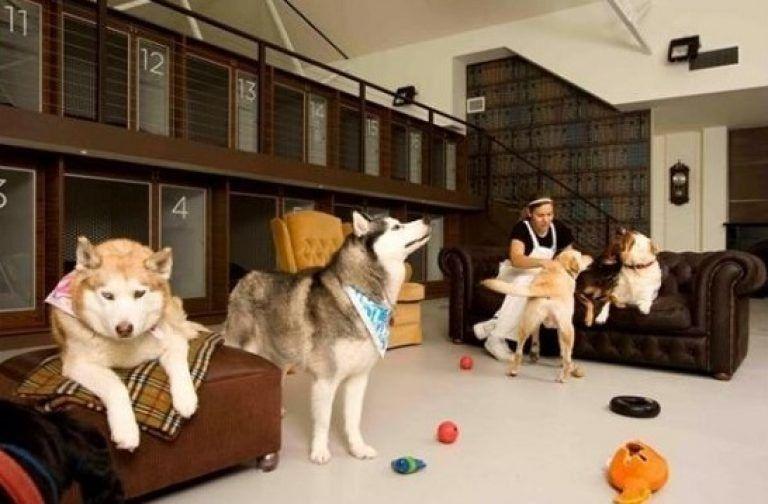 Лучшие гостиницы для животных в Москве в 2021 году