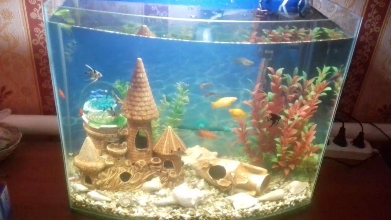 Лучшие фильтры для аквариума в 2020 году