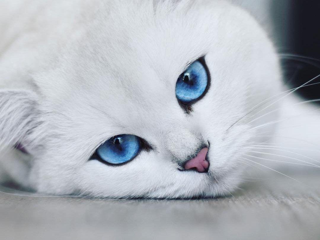 Рейтинг лучших кормов для кастрированных кошек и котов 2021 года