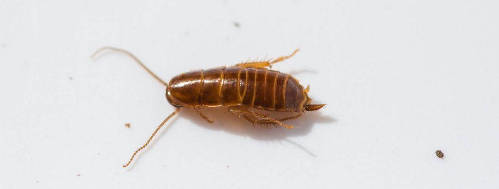 Лучшие средства от тараканов в квартире, отзывы о самых эффективных 2019 года