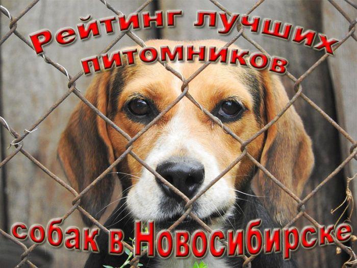 Рейтинг лучших питомников собак в Новосибирске на 2020 год