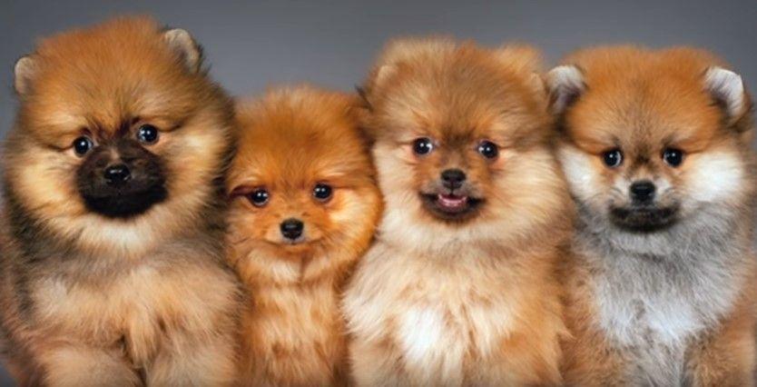 Лучшие питомники собак в Самаре на 2020 год