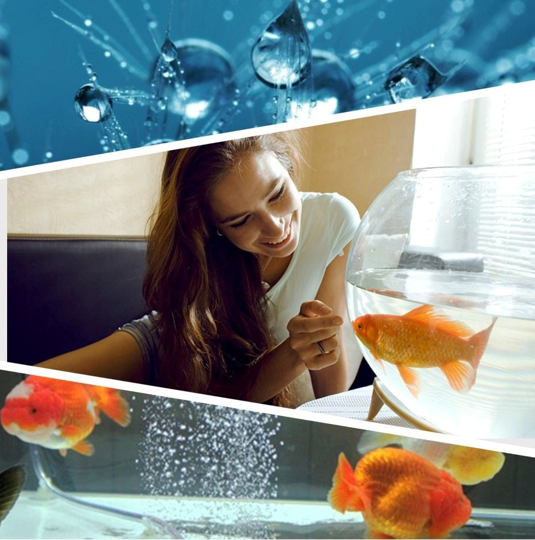 У меня живёт золотая рыбка: лучшие компрессоры для аэрации аквариумов 2020
