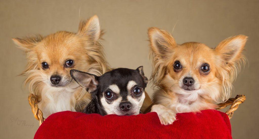 Как выбрать лучший питомник по разведению собак в Москве
