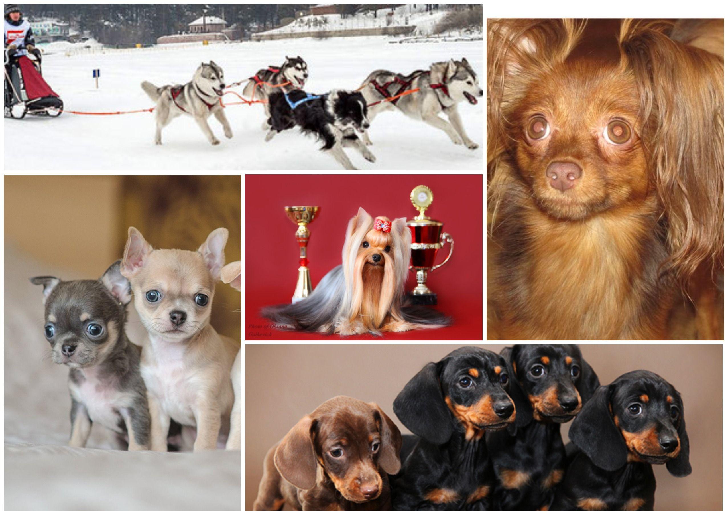 Где живут четвероногие друзья: лучшие собачьи питомники Омска в 2021 году