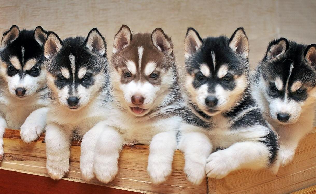 Рейтинг лучших питомников собак в Красноярске на 2020 год