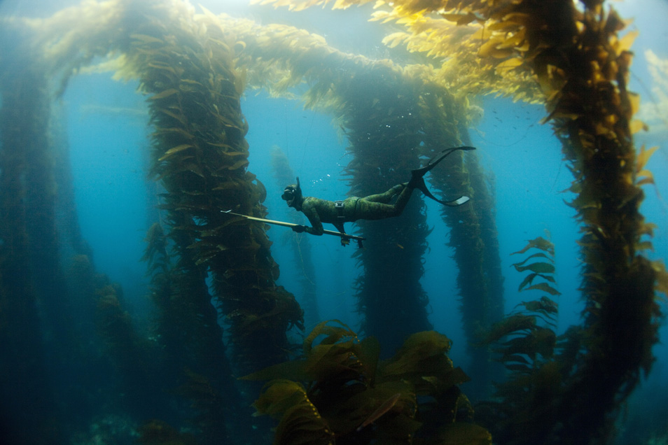 Рейтинг лучших гарпунов и ружей для подводной охоты на 2021 год