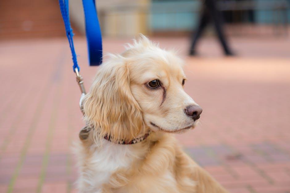 Рейтинг лучших поводков для собак на 2020 год