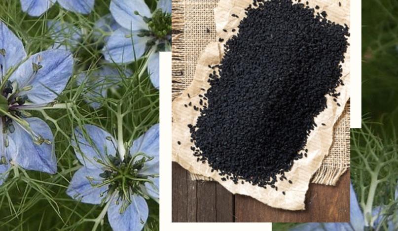Рейтинг лучших производителей масла черного тмина на 2020 год