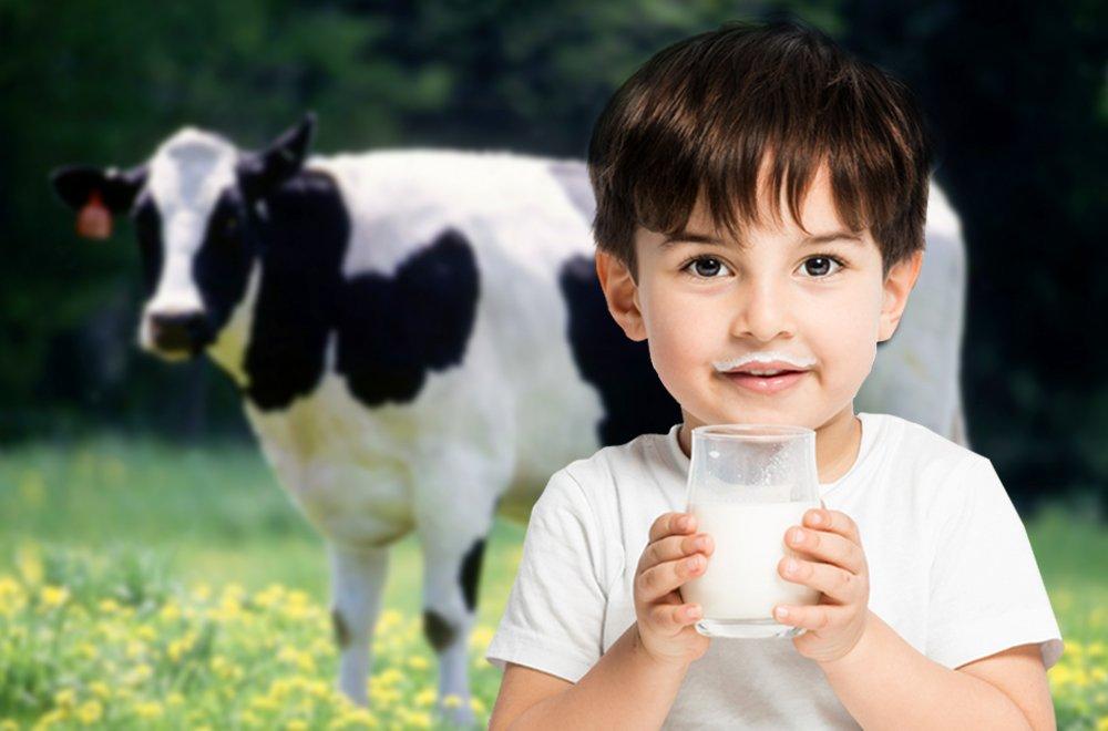 Рейтинг лучших производителей молока на 2020 год