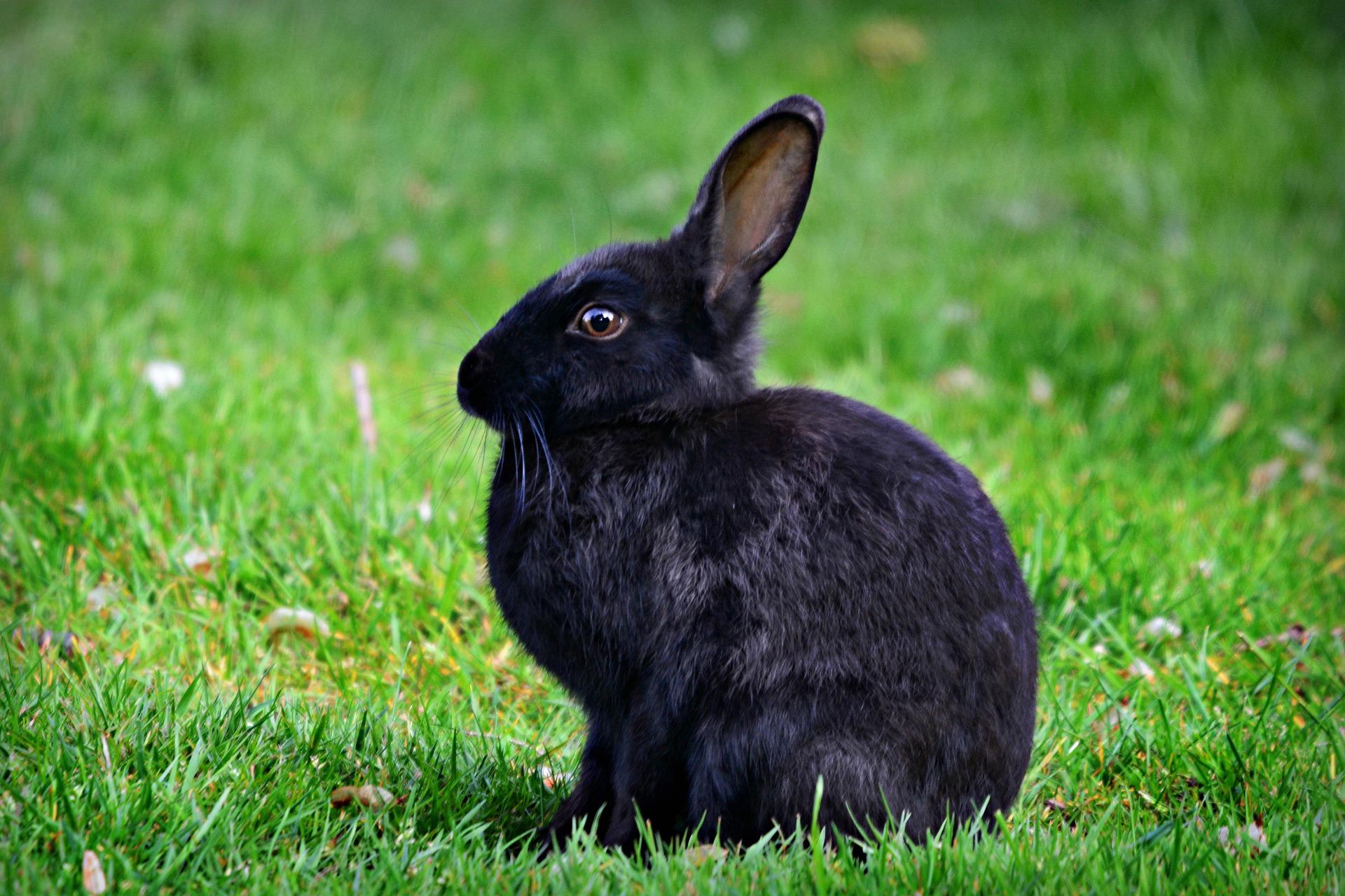 Рейтинг лучших клеток для кроликов на 2020 год