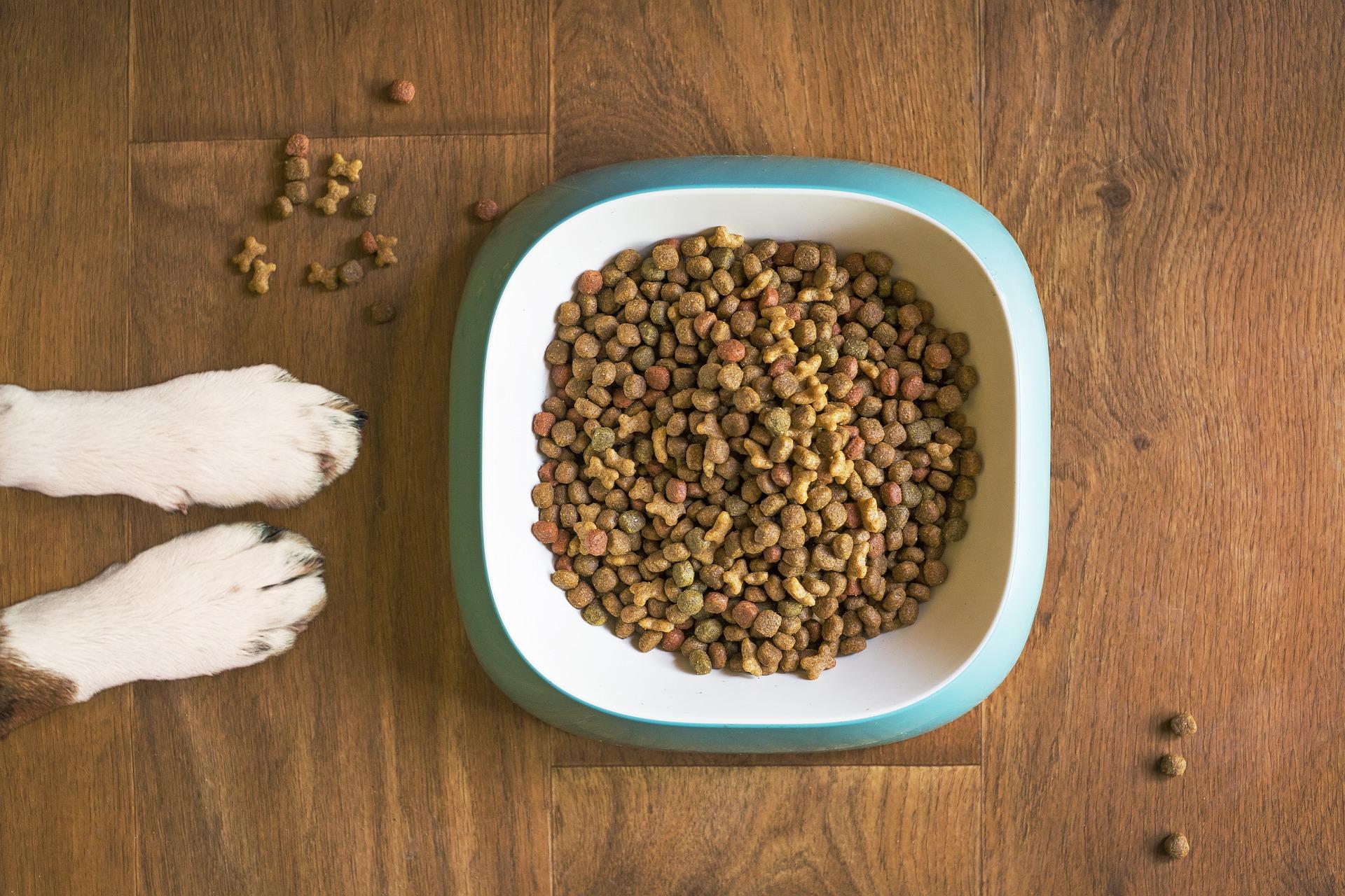 Рейтинг лучших холистик кормов для животных на 2021 год
