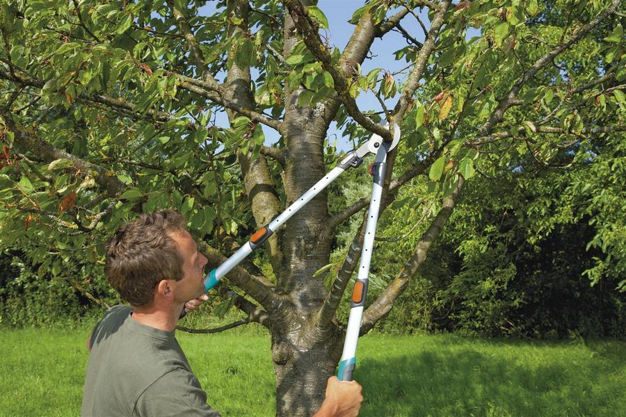 Рейтинг лучших сучкорезов для обрезки деревьев на 2021 год
