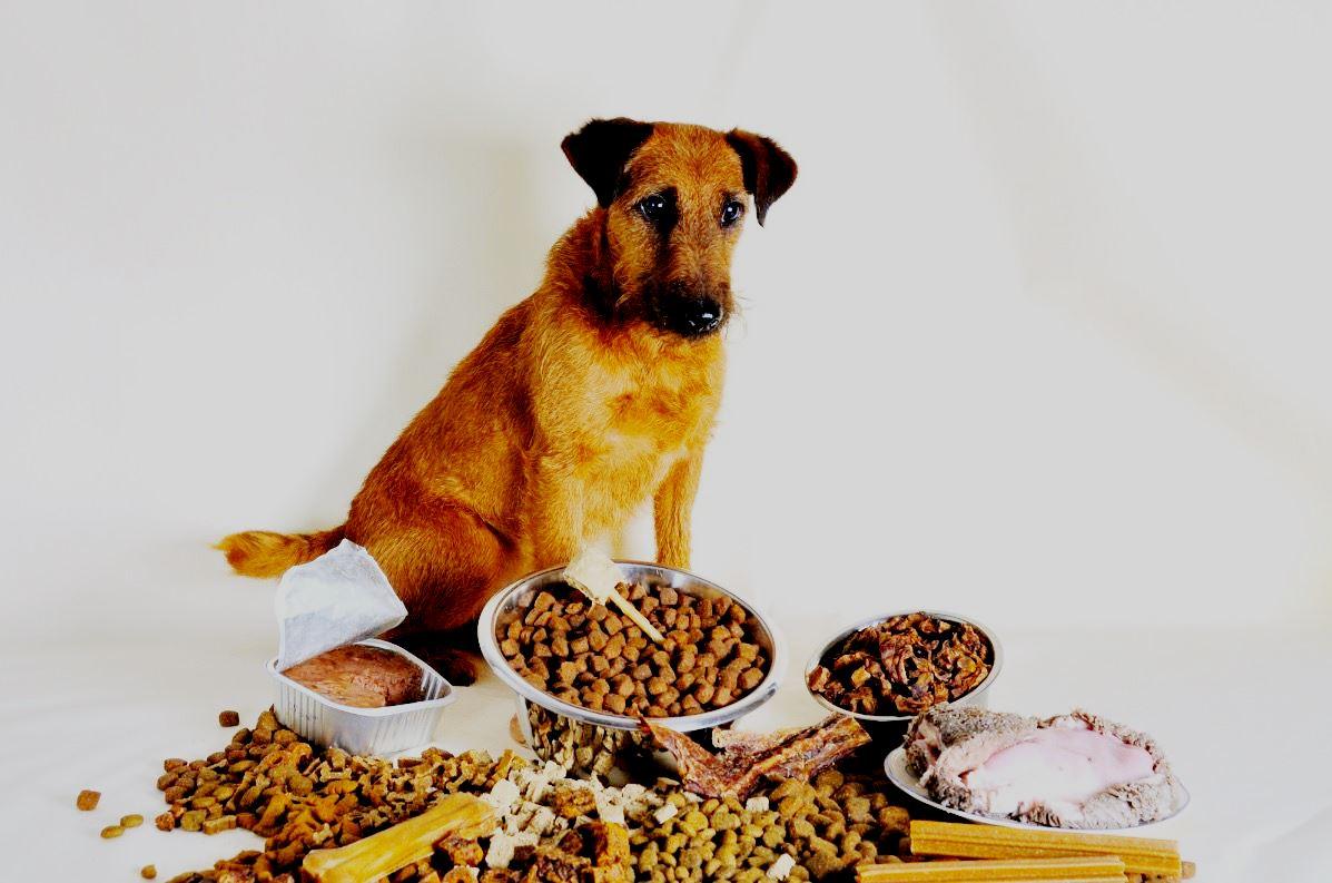 Рейтинг лучших кормов для пожилых собак на 2021 год