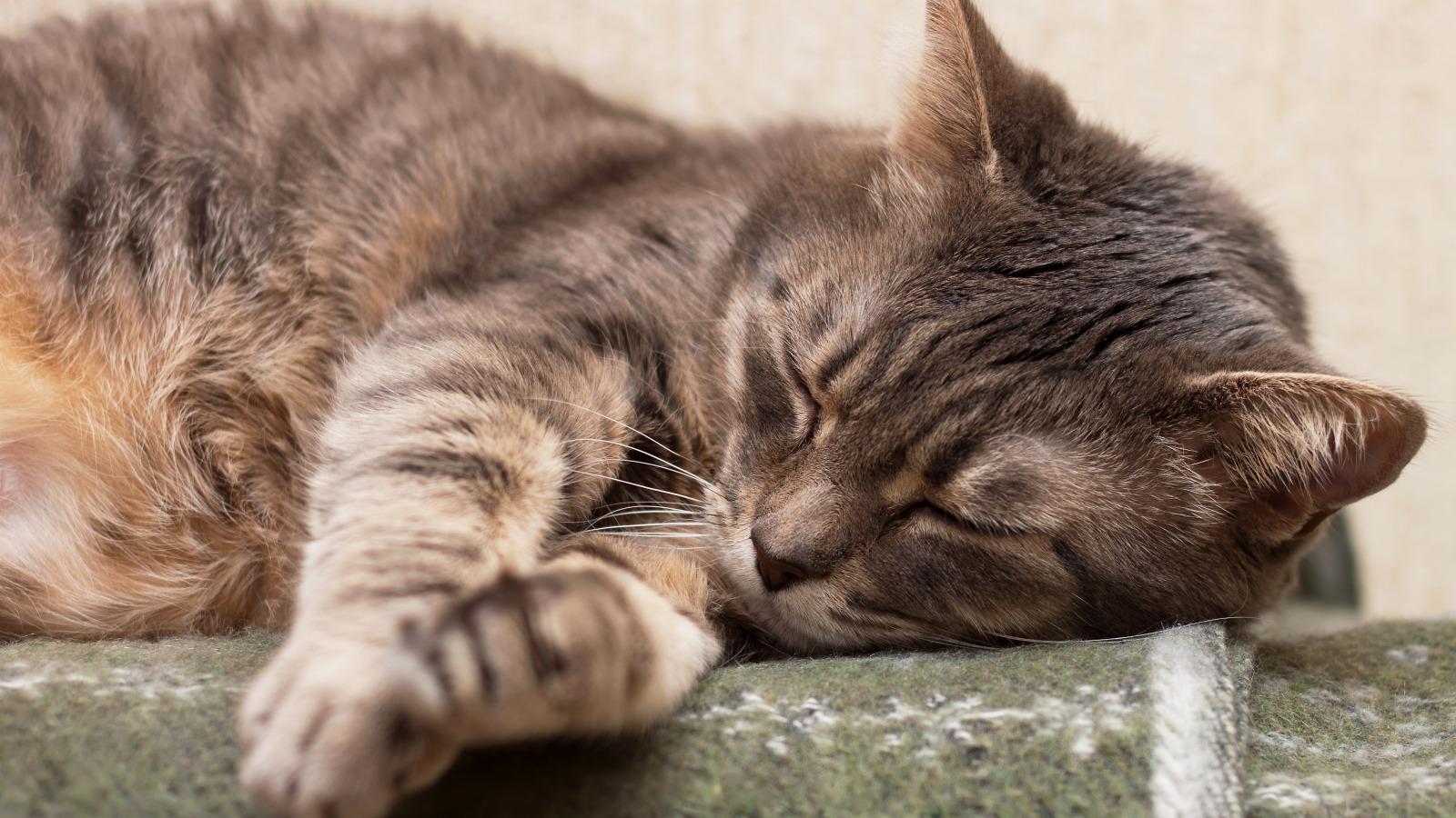 Рейтинг лучших снотворных и успокоительных средств для кошек на 2021 год