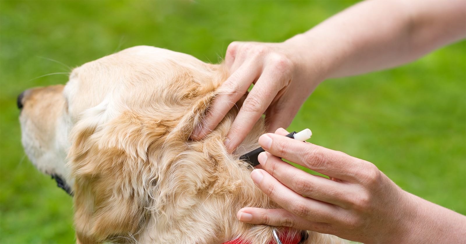 Рейтинг лучших таблеток от клещей для собак на 2021 год