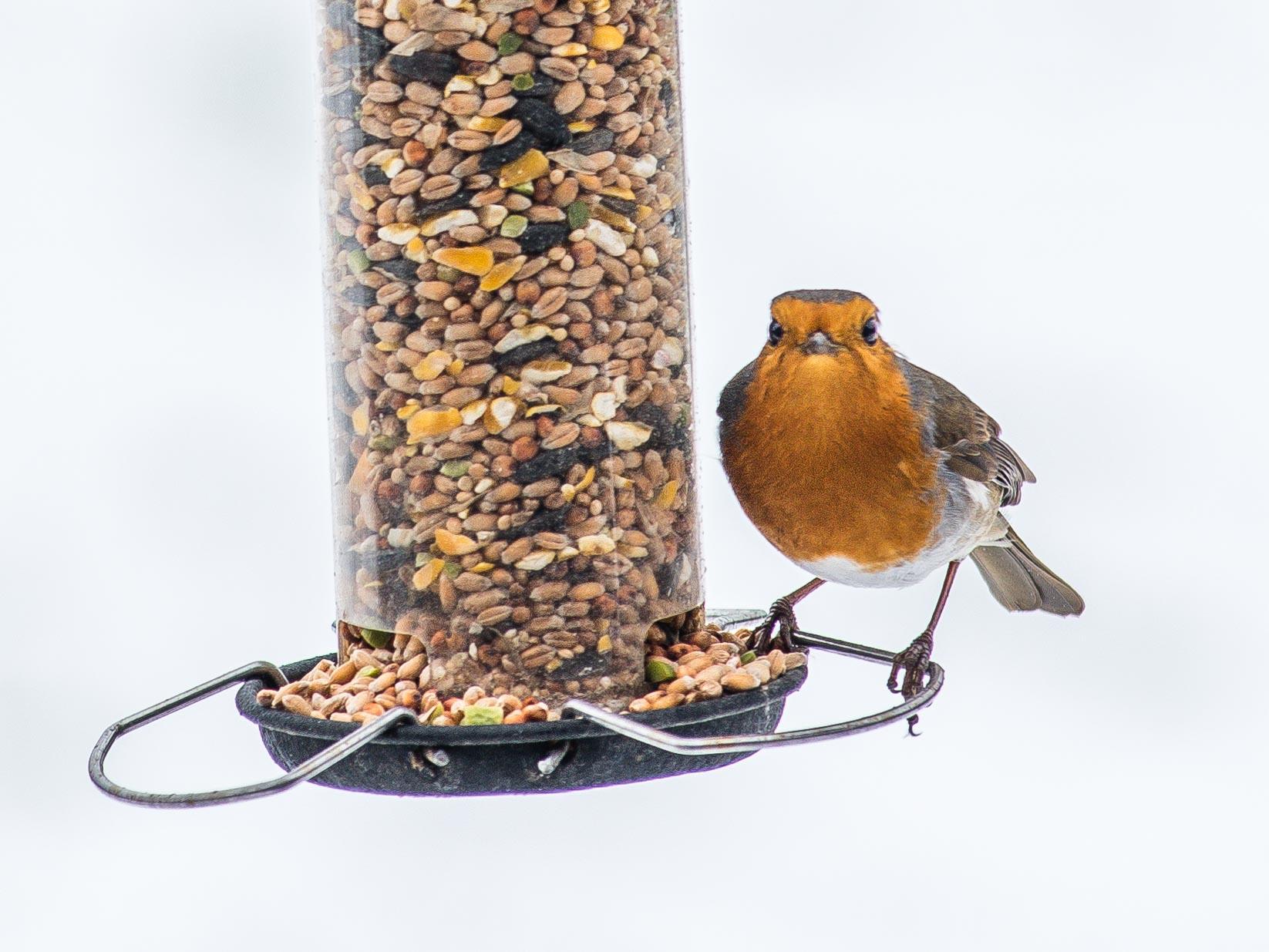 Рейтинг лучших витаминов и добавок для птиц на 2021 год