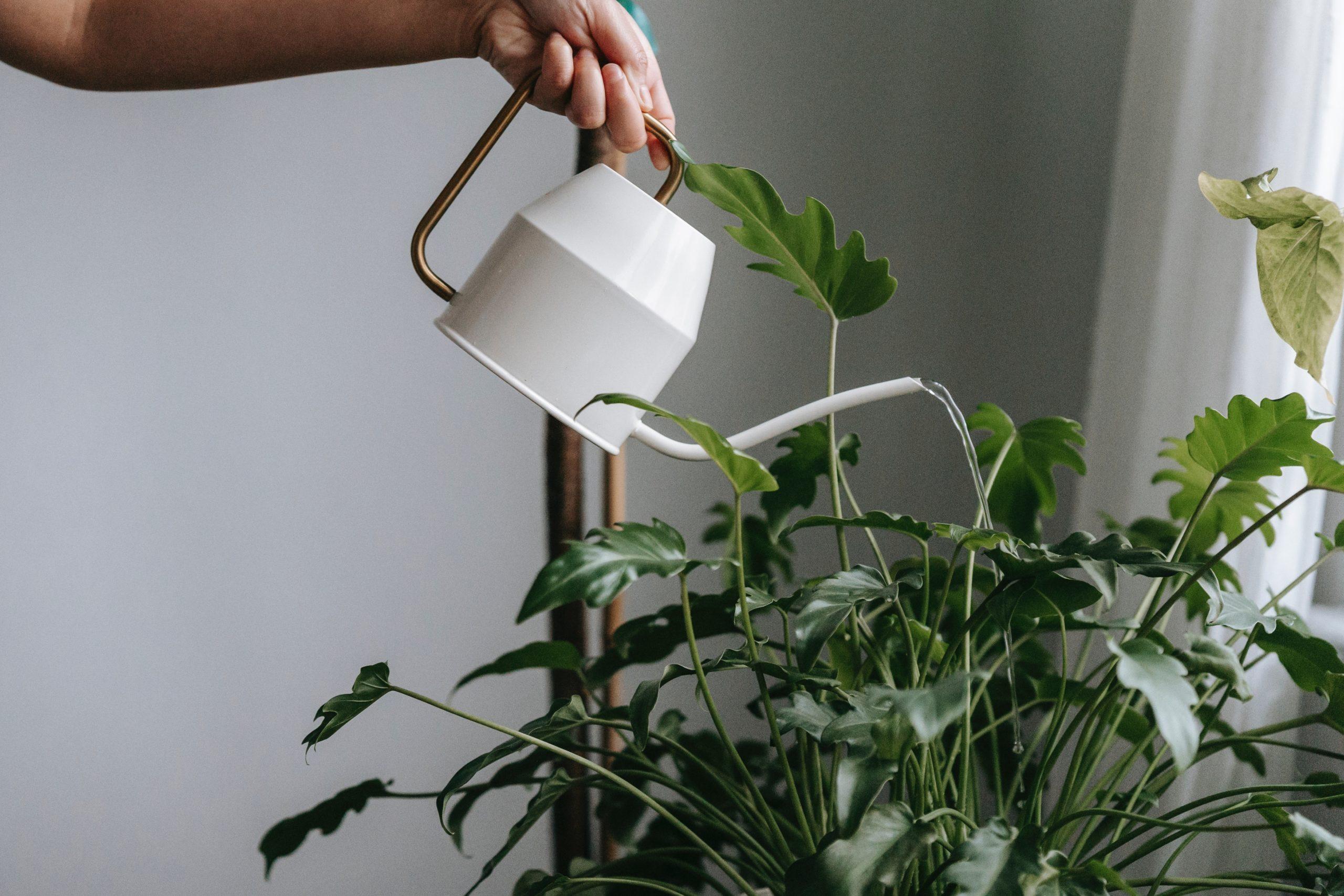 Рейтинг лучших леек для комнатных растений на 2021 год